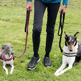 Uschis Blog Hunde Rechtsthemen