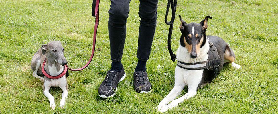 Uschis Blog Uschi mit ihren Hunden