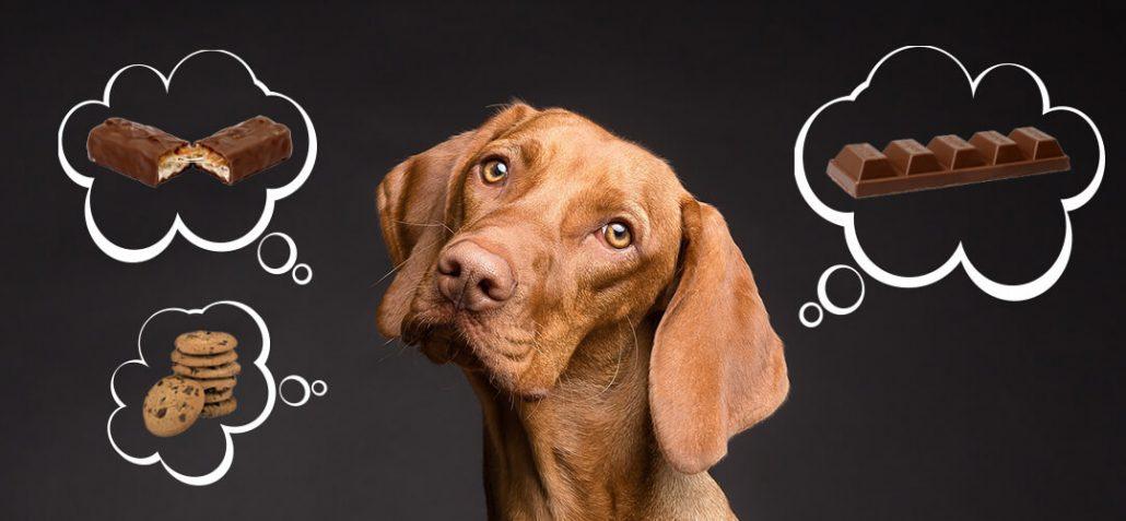 Eine Vergiftung Beim Hund Vermeiden Ziemer Falke Blog