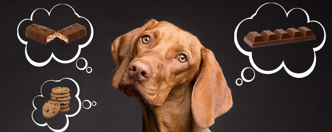 Hund denkt an für ihn giftige Schokolade, Kekse und Riegel