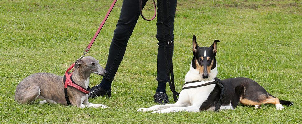 Vorbereitung Hundetrainerpruefung