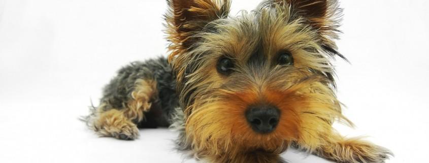 Nonverbale Hundeerziehung
