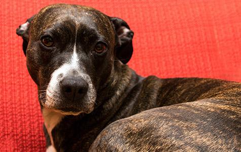 ziemer-falke-bild-hundewissen-gesunfheit-stress-nein-danke